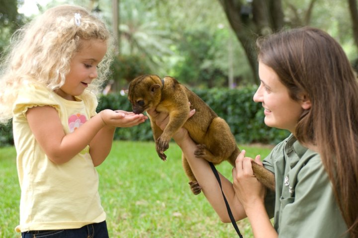 Image Result For Busch Gardens Tampa Fl Zoo