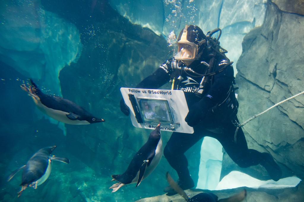 AnimalVision Diver