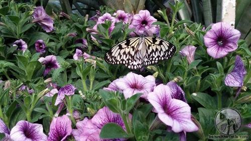San Diego Safari Park - Butterfly Jungle4