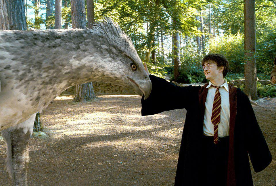 harry-and-hippogriff