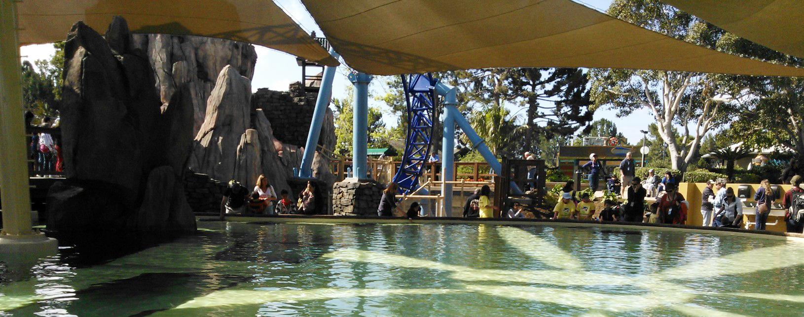 The Dominion San Antonio >> SeaWorld San Diego's New Ray Pool and Aquarium