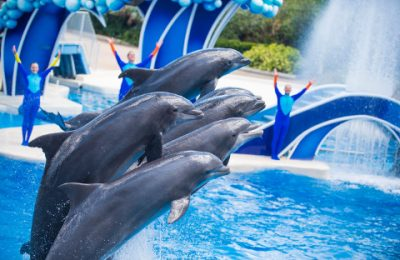 Behind The Thrills | SeaWorld lays off employees through several parks