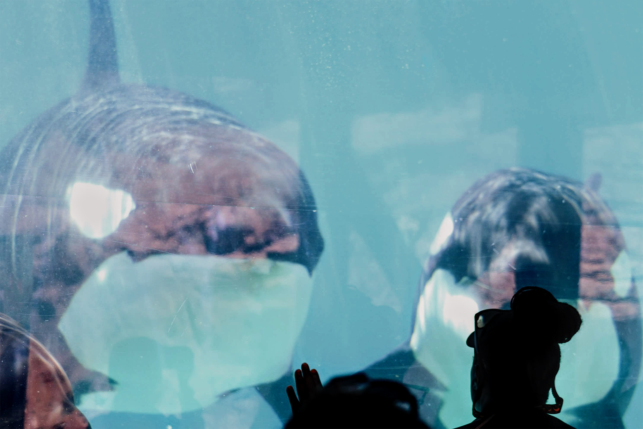 Behind The Thrills | Opinion: SeaWorld's Soul Must Remain With Animals