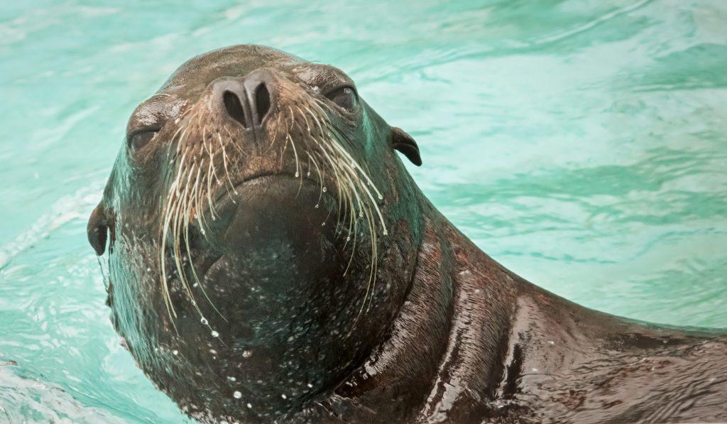 SeaWorld Sea Lion feeding